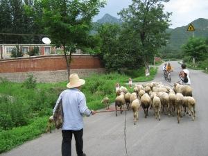 an idyllic roadside scene