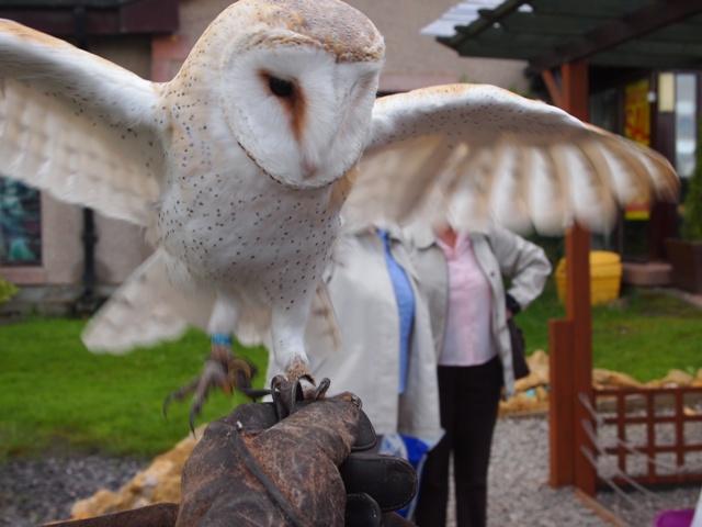 Hello Hedwig